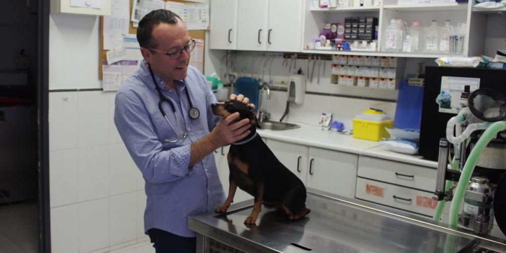 The lean veterinarian
