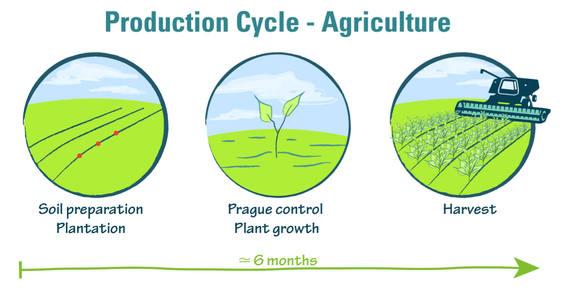 The agricultural production cycle
